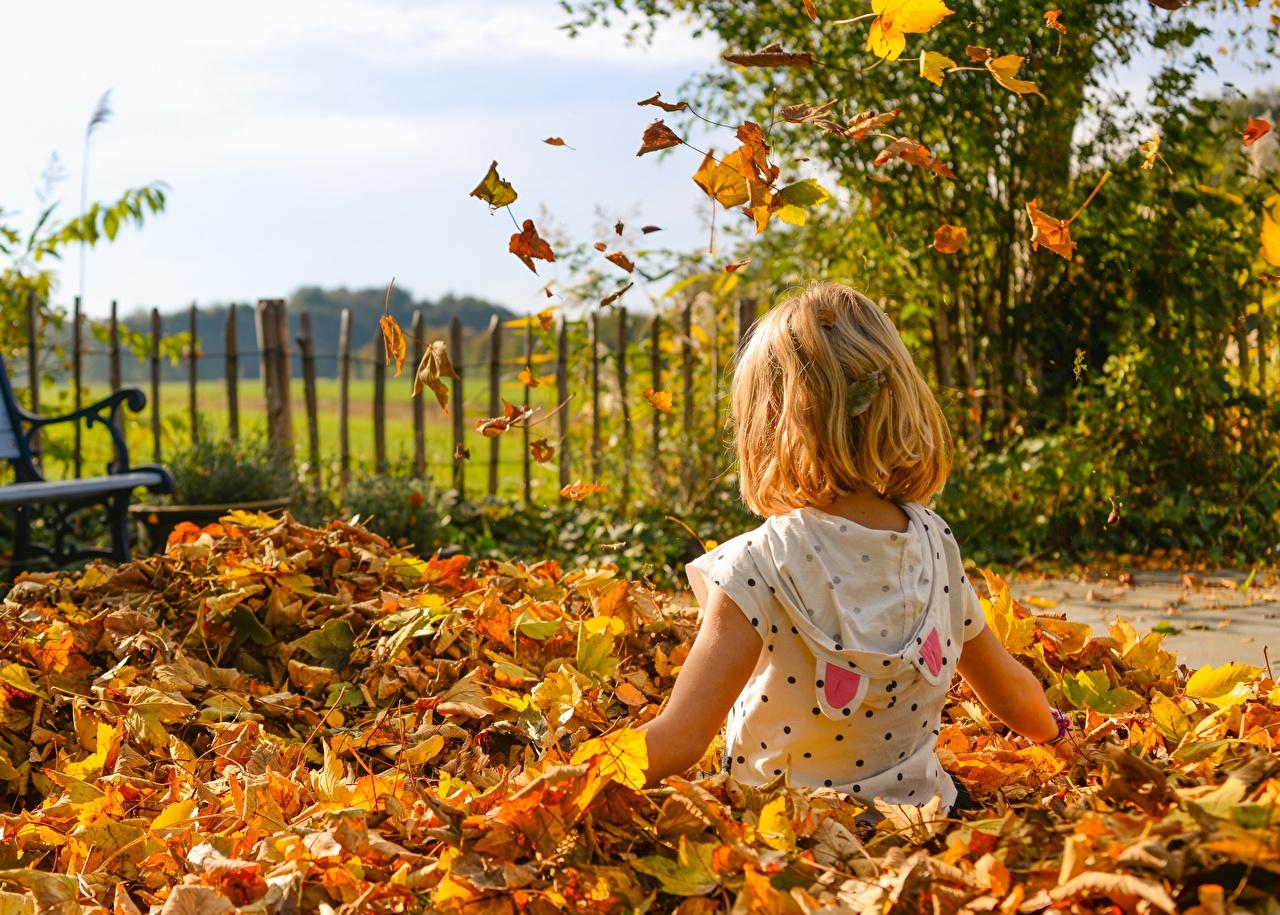 Картинка девочка лист Дети Осень сидящие Девочки Листья Листва ребёнок осенние сидя Сидит