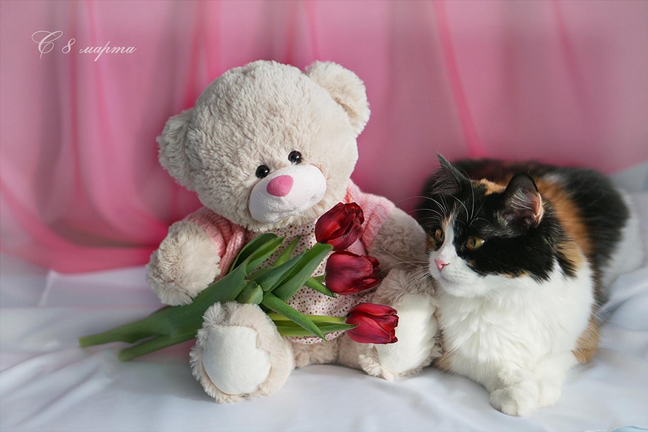 Фотографии Кошки Международный женский день российские Красный Тюльпаны Цветы Плюшевый мишка Трое 3 Животные Праздники Коты 8 марта Русские Мишки втроем