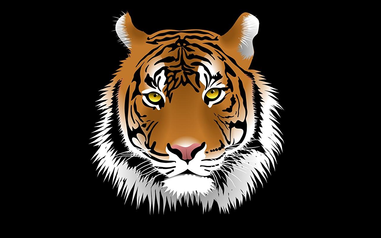 Фотографии Тигры Большие кошки морды головы животное Векторная графика тигр Морда Голова Животные