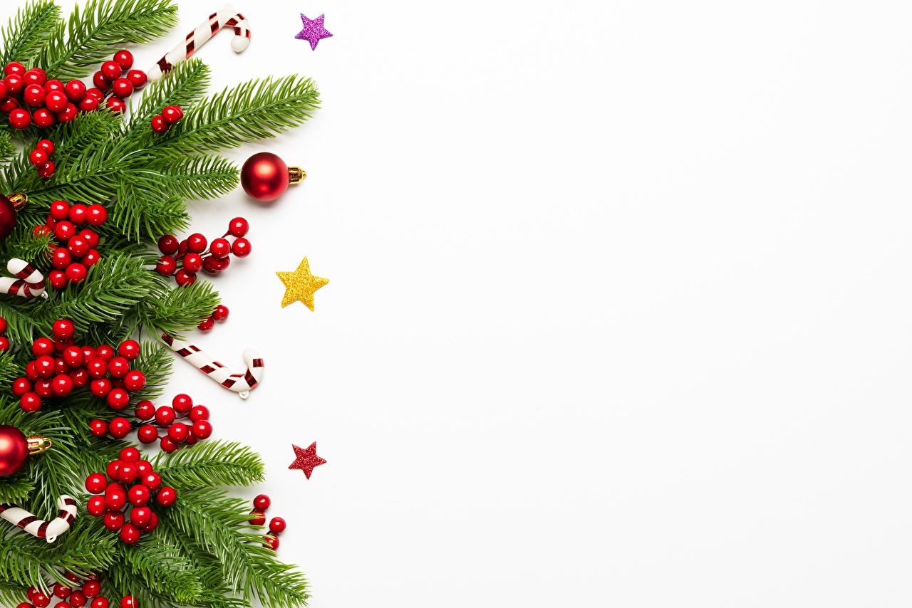 Фото Новый год Ягоды Ветки Шаблон поздравительной открытки белом фоне Рождество ветвь ветка на ветке Белый фон белым фоном