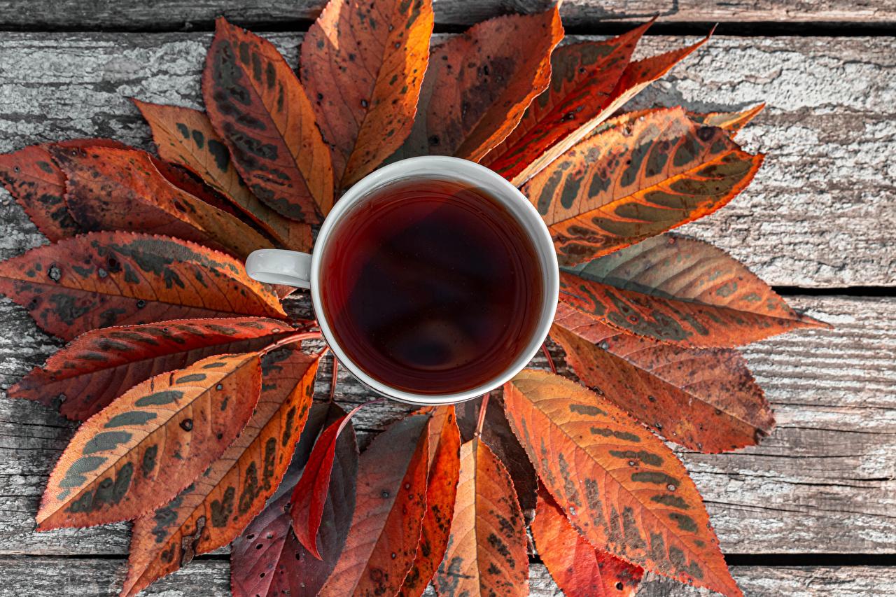 Картинка Листья Чай осенние Еда чашке Доски лист Листва Осень Пища Чашка Продукты питания