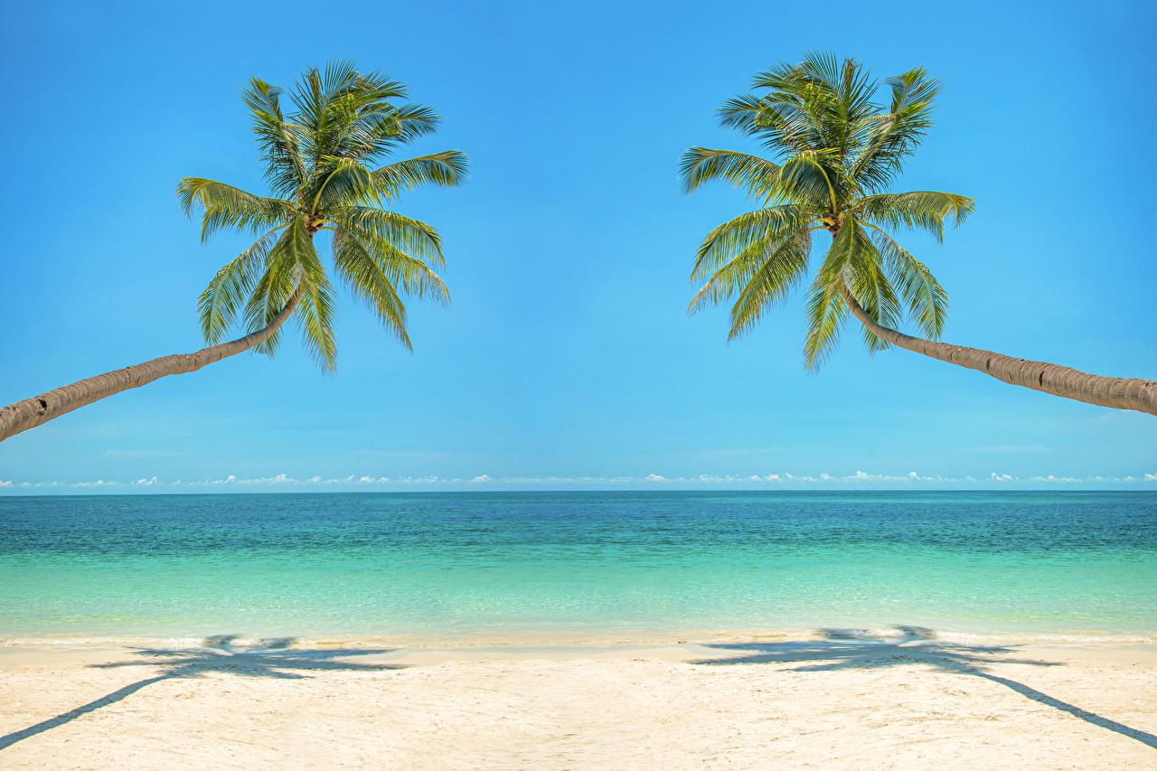 Картинка Море Природа Пальмы Тропики Горизонт Побережье берег