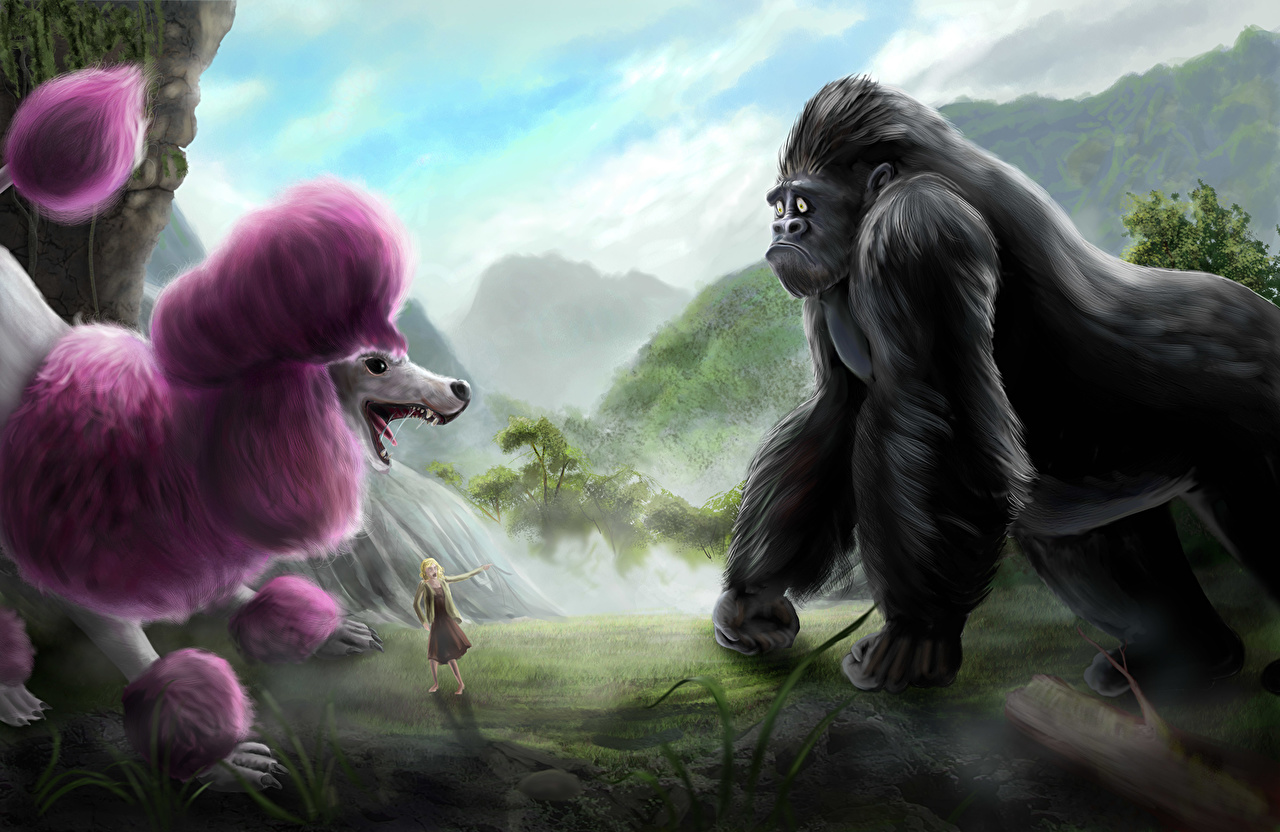 Фотография Пудель Собаки Обезьяны Животные Рисованные пуделя пудели собака обезьяна животное