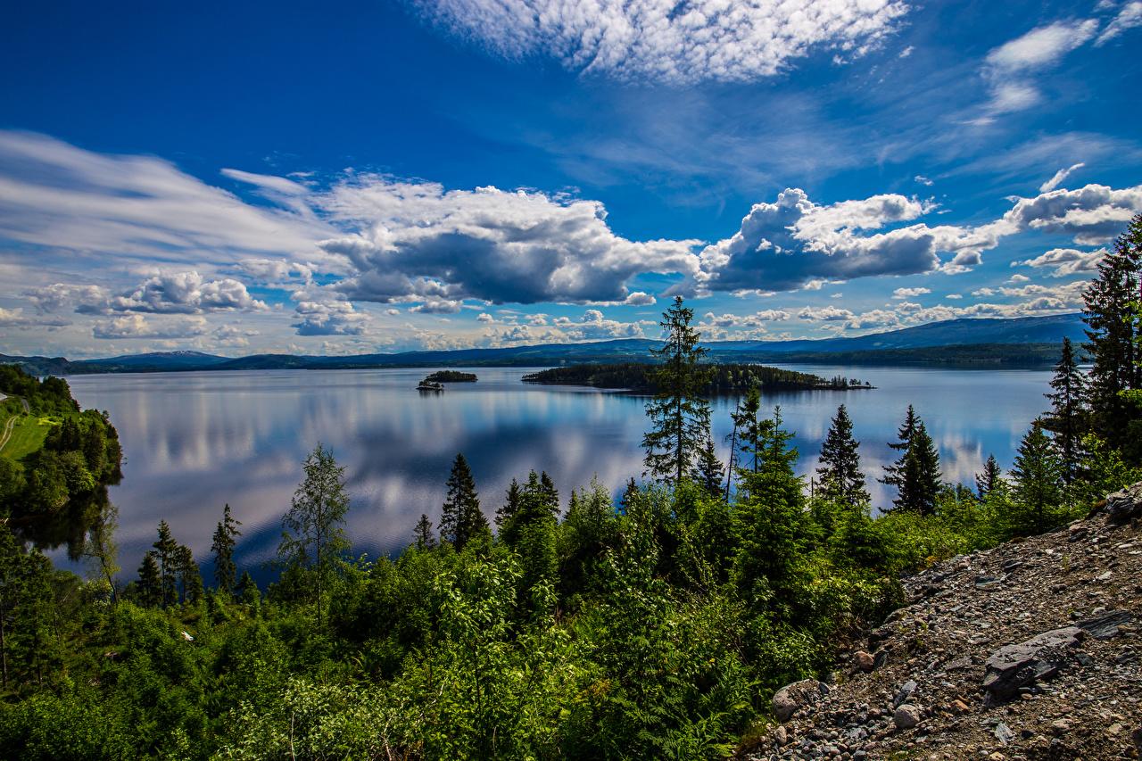 Фотографии Природа Норвегия Geiranger Фьорд Небо Пейзаж облачно Деревья Облака облако дерево дерева деревьев