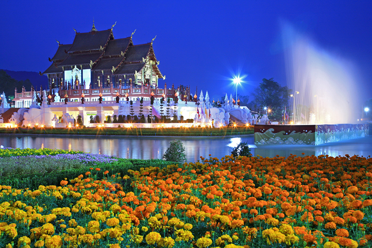 Фотография Таиланд Royal Park Rajapruek (Chiang Mai) Пруд Цветы Бархатцы храм Вечер город цветок Храмы Города