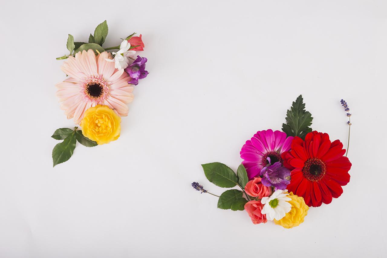 Фотографии Розы гербера цветок Альстрёмерия Серый фон роза Герберы Цветы сером фоне