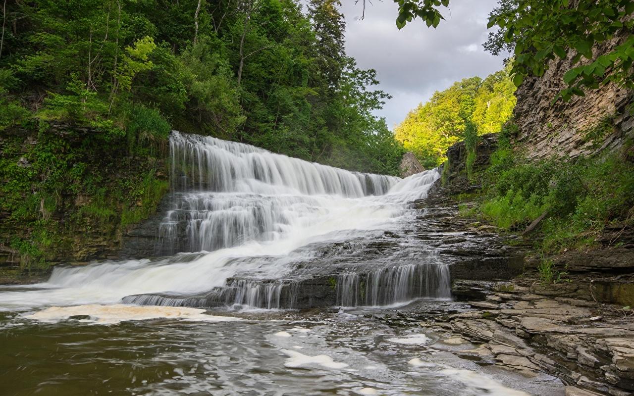 Картинки Природа Водопады Леса речка лес Реки река