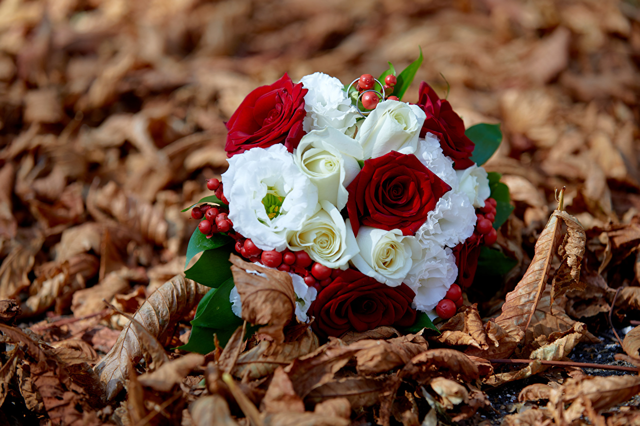 Обои для рабочего стола Листва боке Букеты Цветы лист Листья Размытый фон букет цветок