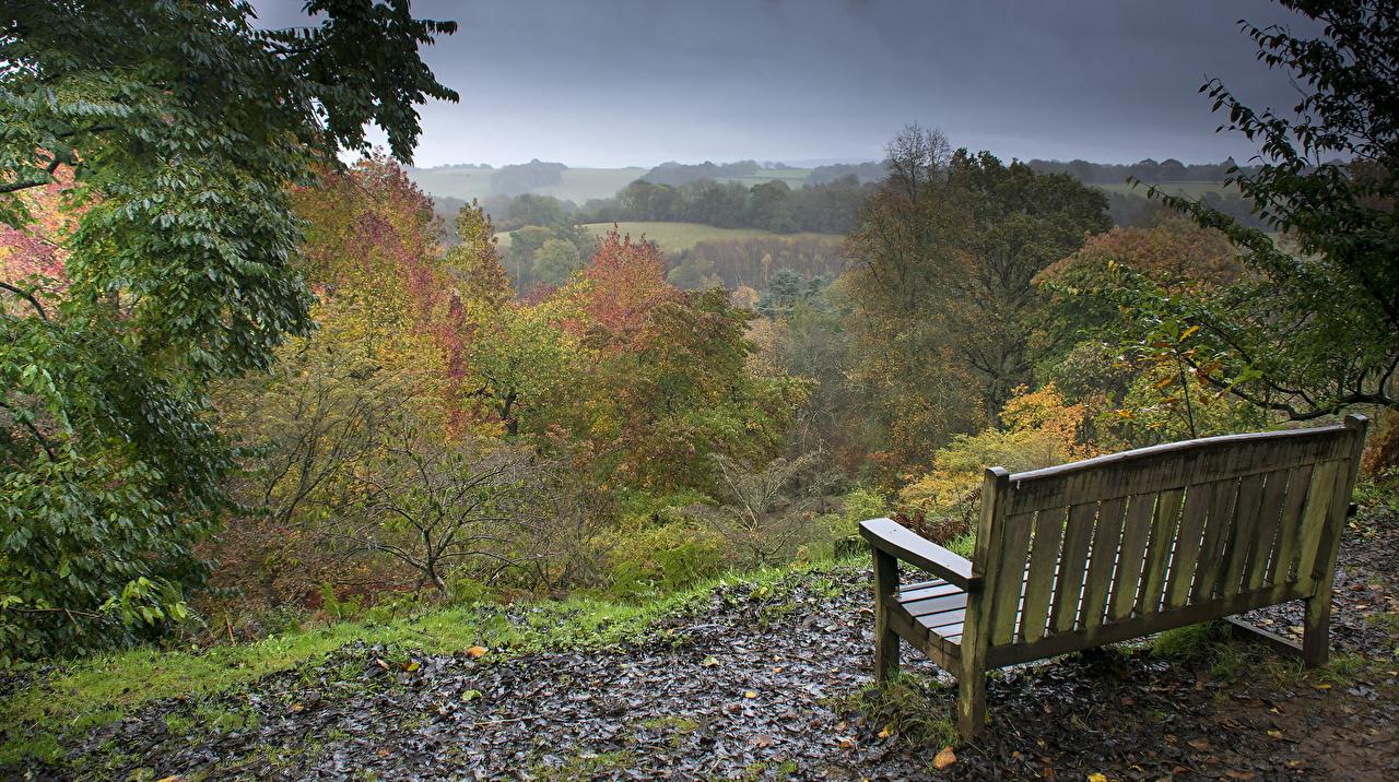 Фотографии Осень Природа Леса Парки Камни Скамейка осенние лес парк Скамья Камень