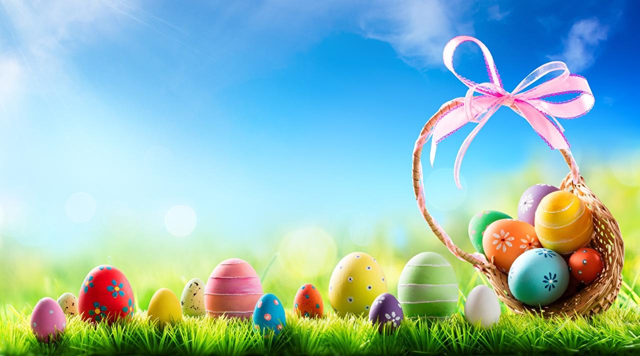 Фотография Пасха яиц Корзинка Трава яйцо Яйца яйцами Корзина корзины траве