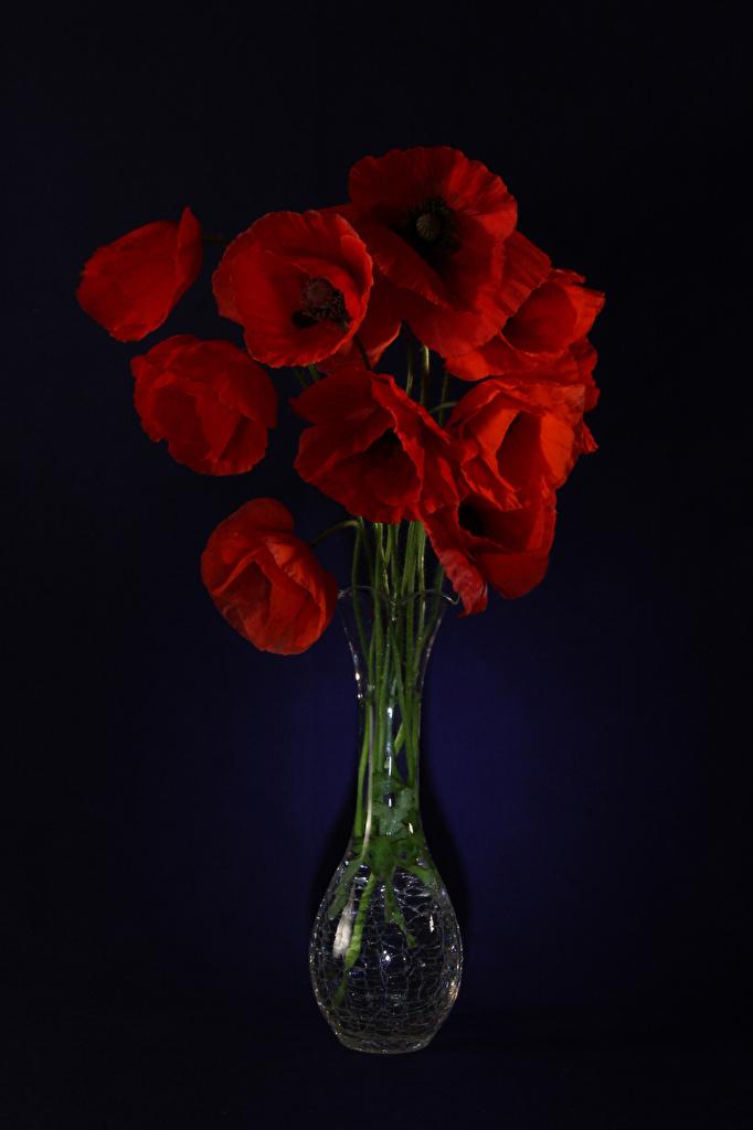 Картинка Красный Маки Цветы Ваза Черный фон