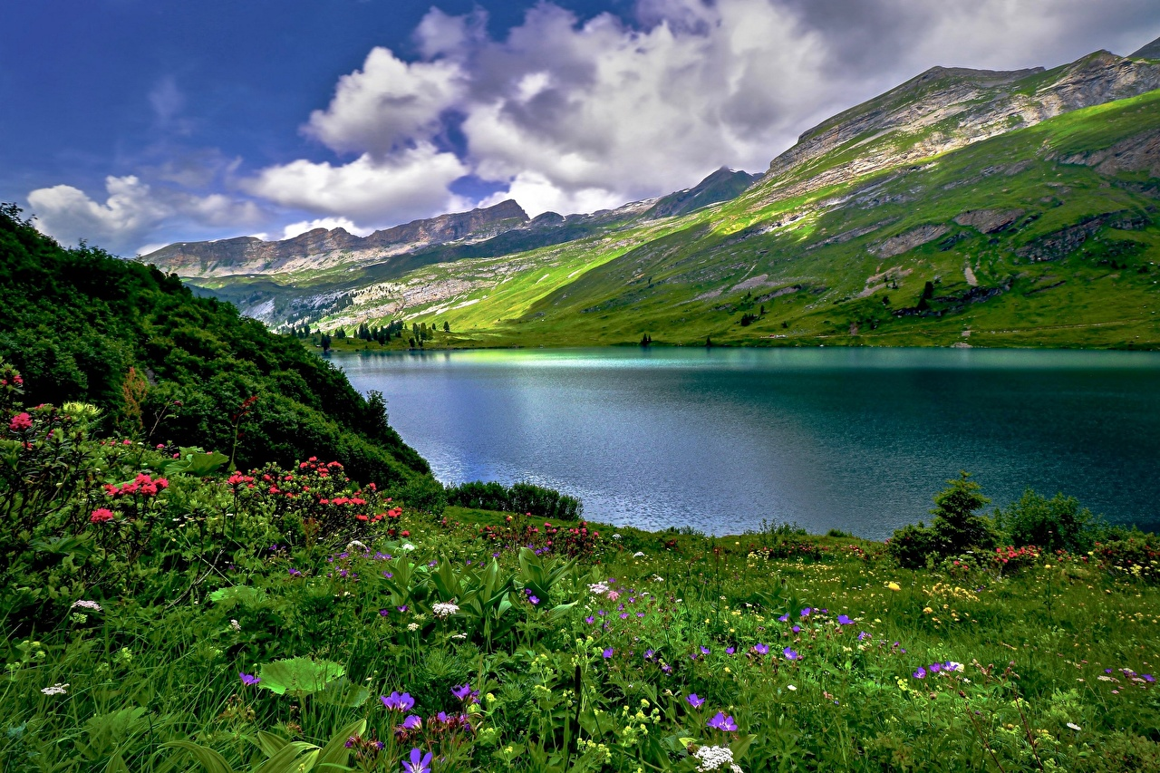 Фотографии альп Швейцария Engstlen Lake Горы Природа Луга Озеро Трава Альпы гора траве