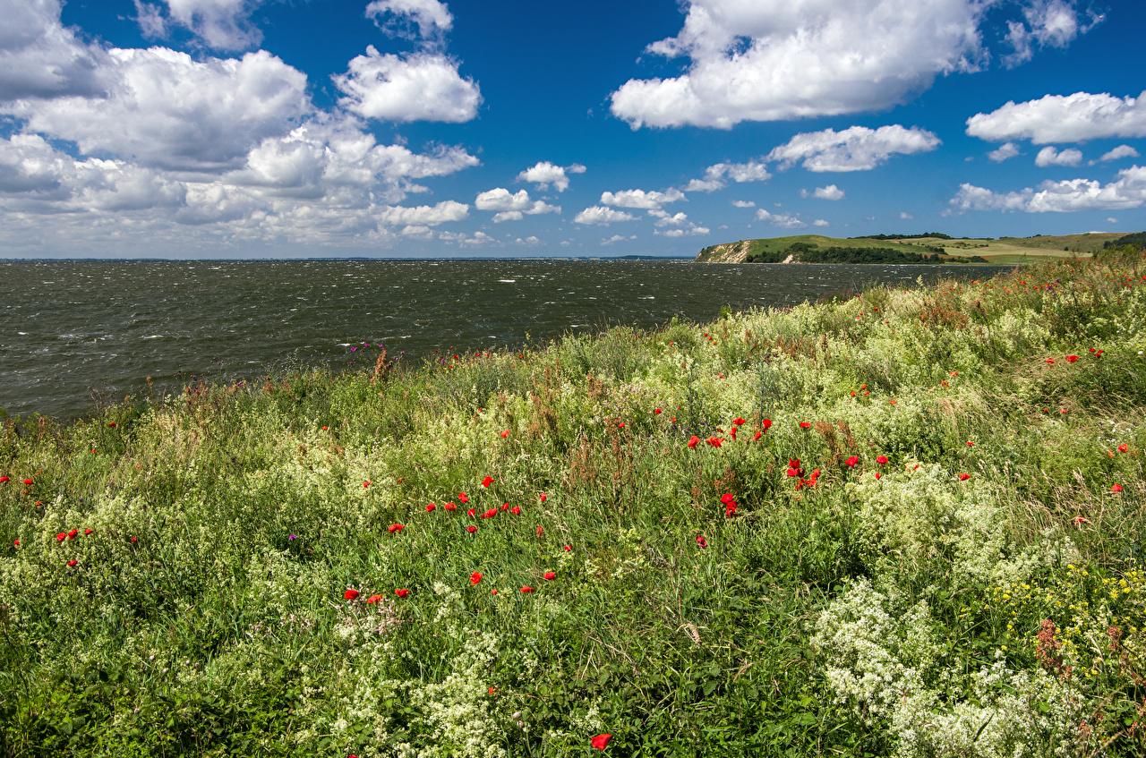 Фотографии Германия Thiessow Природа Небо Маки Трава берег Облака Побережье