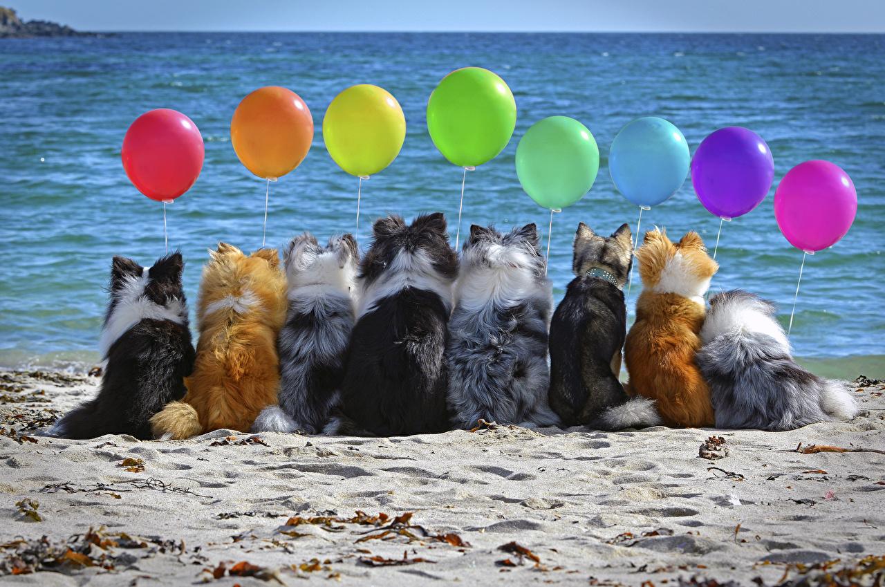 Фото Собаки воздушные шарики Сзади Много Животные Воздушный шарик воздушным шариком воздушных шариков вид сзади животное