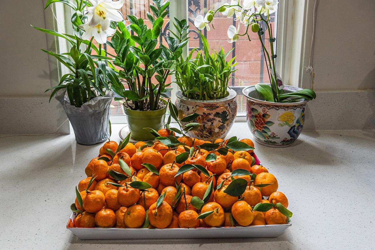 Картинка орхидея Мандарины Цветочный горшок Еда Много Орхидеи Пища Продукты питания