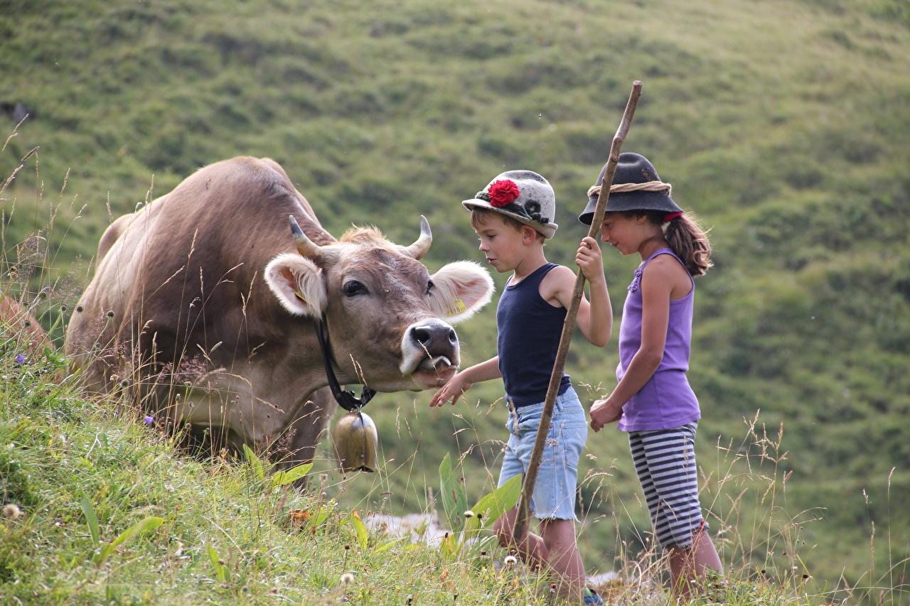 Фото Девочки Корова Мальчики альп Дети шляпе траве девочка мальчик мальчишки мальчишка Альпы ребёнок Шляпа шляпы Трава
