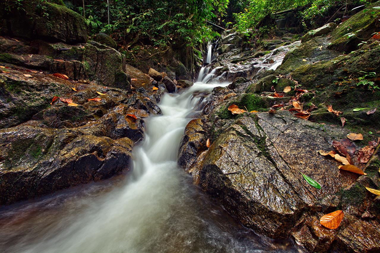 Фотография Листья Природа Водопады река Камень лист Листва Реки Камни речка