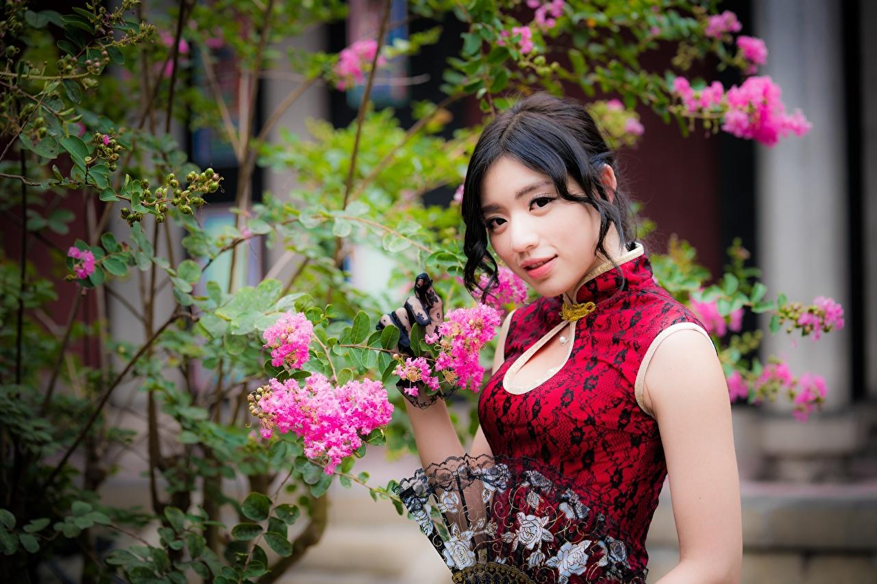 Картинки брюнеток hand fan девушка азиатки Кусты смотрит платья Брюнетка брюнетки Девушки молодые женщины молодая женщина Азиаты кустов Взгляд смотрят Платье