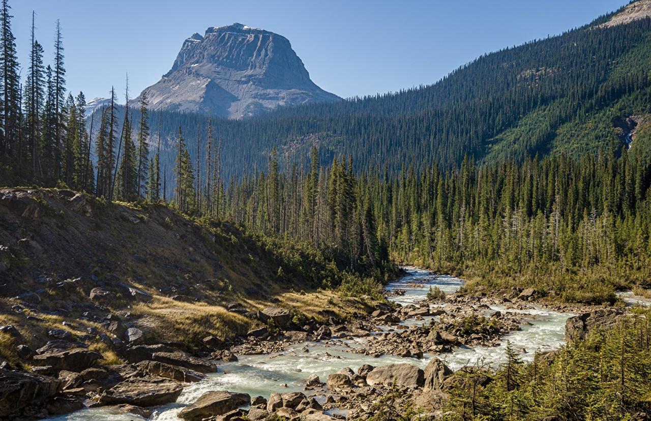 Картинки Канада Yoho National Park Горы Природа парк Леса река Камни гора лес Парки Реки речка Камень