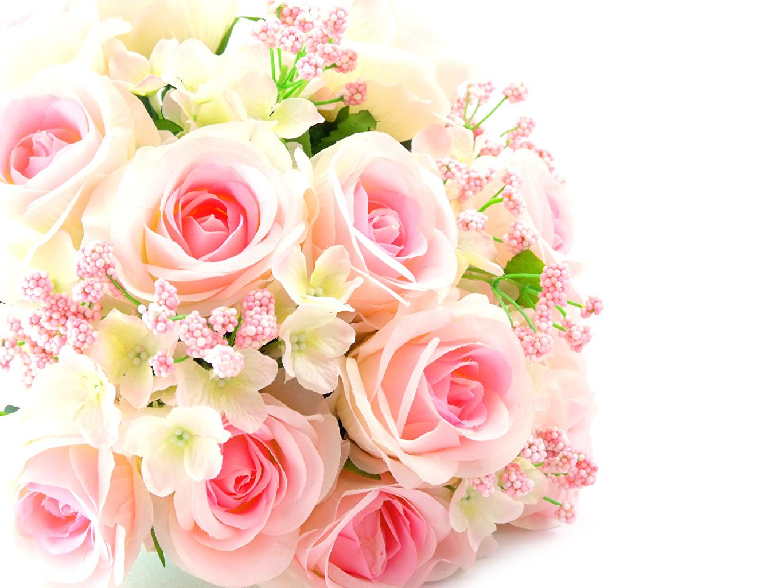 фон из роз фото