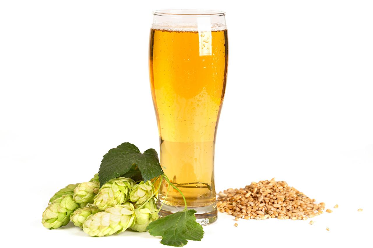 Картинка Пиво Хмель зерно стакана Продукты питания белом фоне Зерна Стакан стакане Еда Пища Белый фон белым фоном