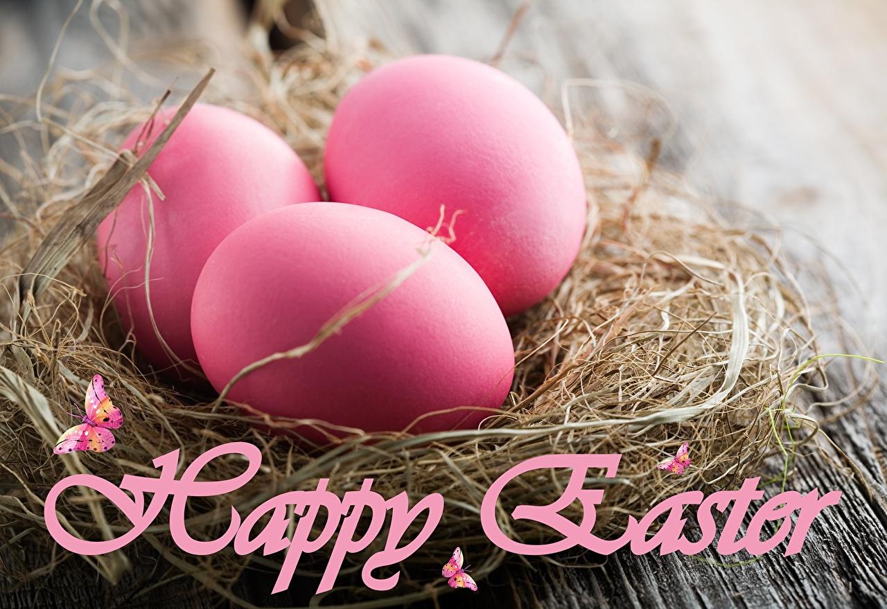 Фото Пасха яиц Гнездо Розовый Праздники яйцо Яйца яйцами гнезда гнезде розовая розовые розовых