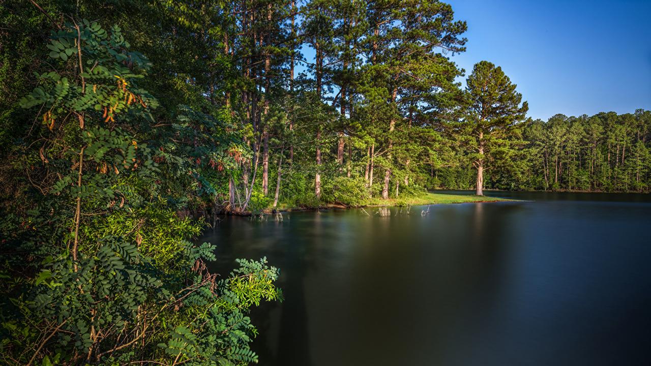 Фото США West Point Lake Georgia Природа Леса Озеро берег дерево штаты Побережье дерева Деревья деревьев