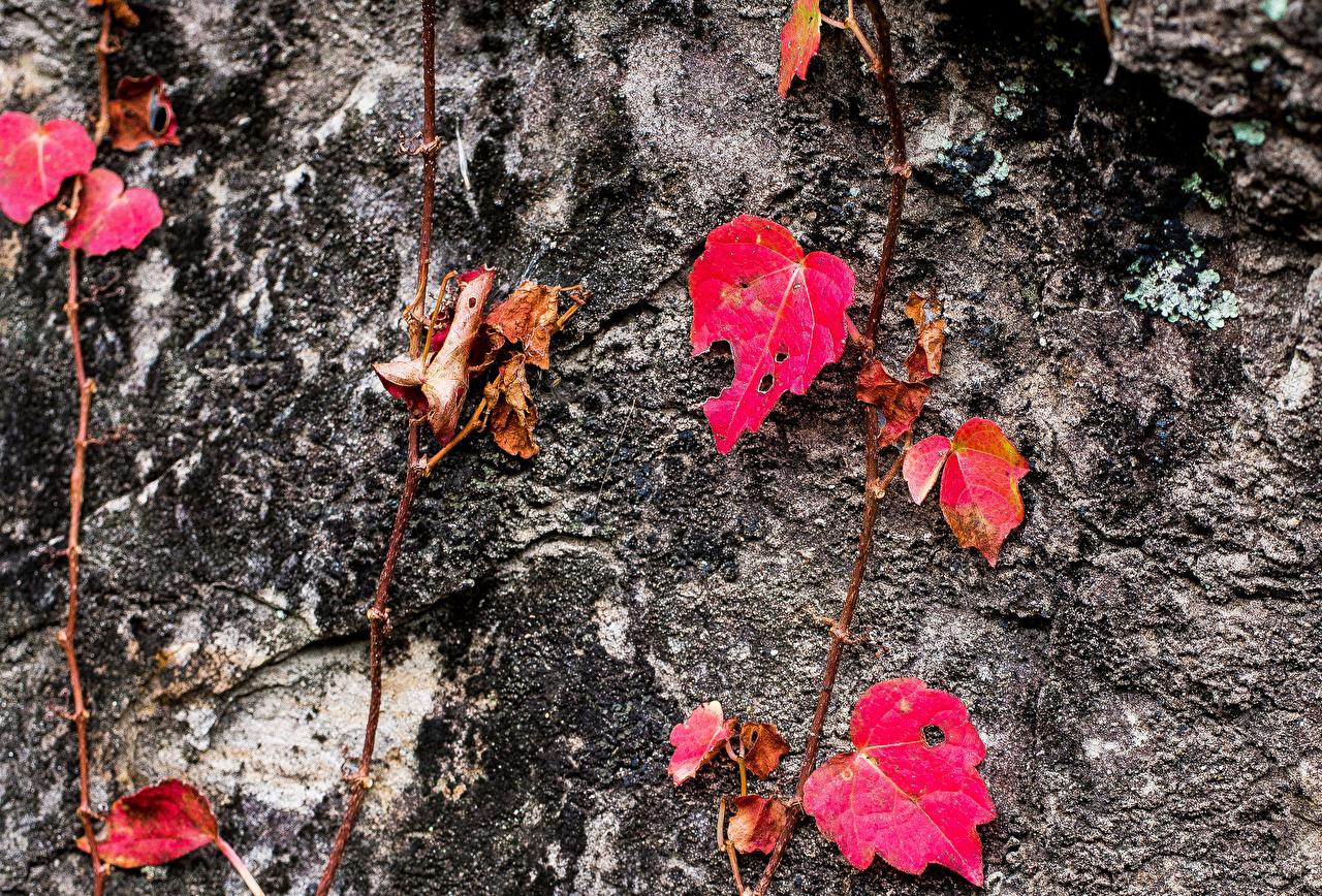 Картинки лист Осень Природа Крупным планом Листва Листья осенние вблизи