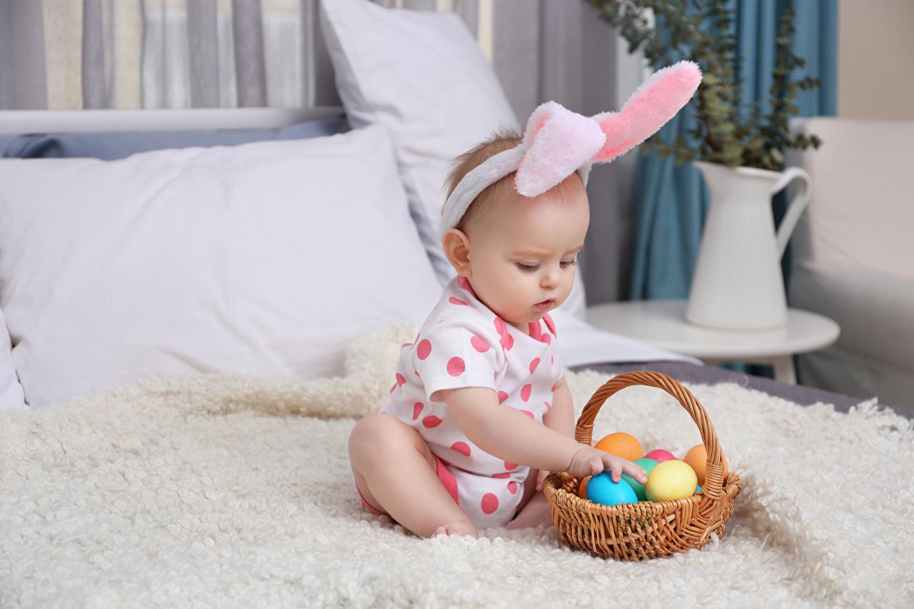 Фото Пасха младенец яйцами Ребёнок Корзина младенца Младенцы грудной ребёнок яиц Дети Яйца яйцо корзины Корзинка