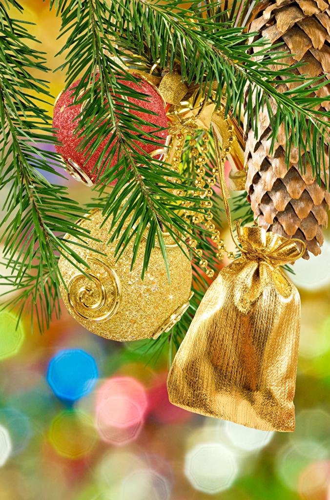 Фотографии Рождество Шар Шишки на ветке Новый год шишка ветвь Ветки ветка Шарики
