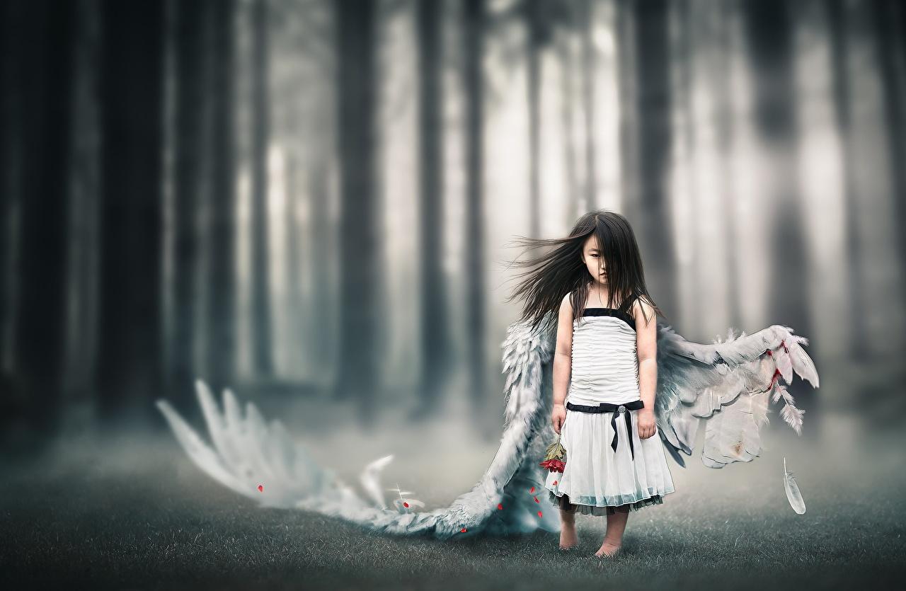 Фотография Девочки Брюнетка Крылья Ребёнок Азиаты Ангелы Дети