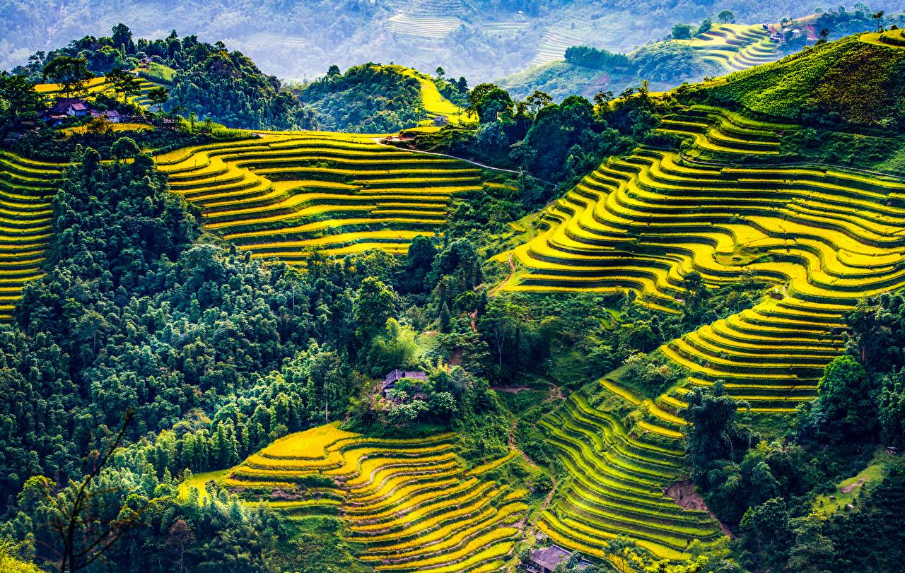 Фотография Вьетнам Mu Cang Chai Природа Поля Леса Холмы