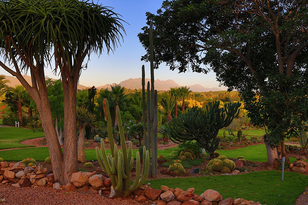 Картинки Африка Южно-Африканская Республика Природа Парки Кактусы деревьев ЮАР парк дерево дерева Деревья