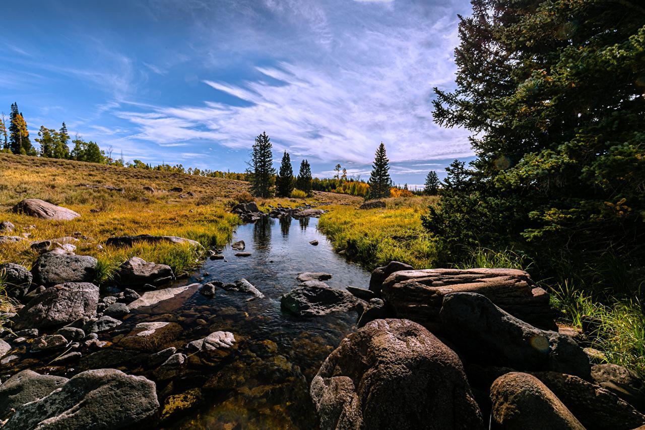 Фотография америка Mammoth Creek Ручей Природа Камень деревьев США штаты ручеек Камни дерево дерева Деревья