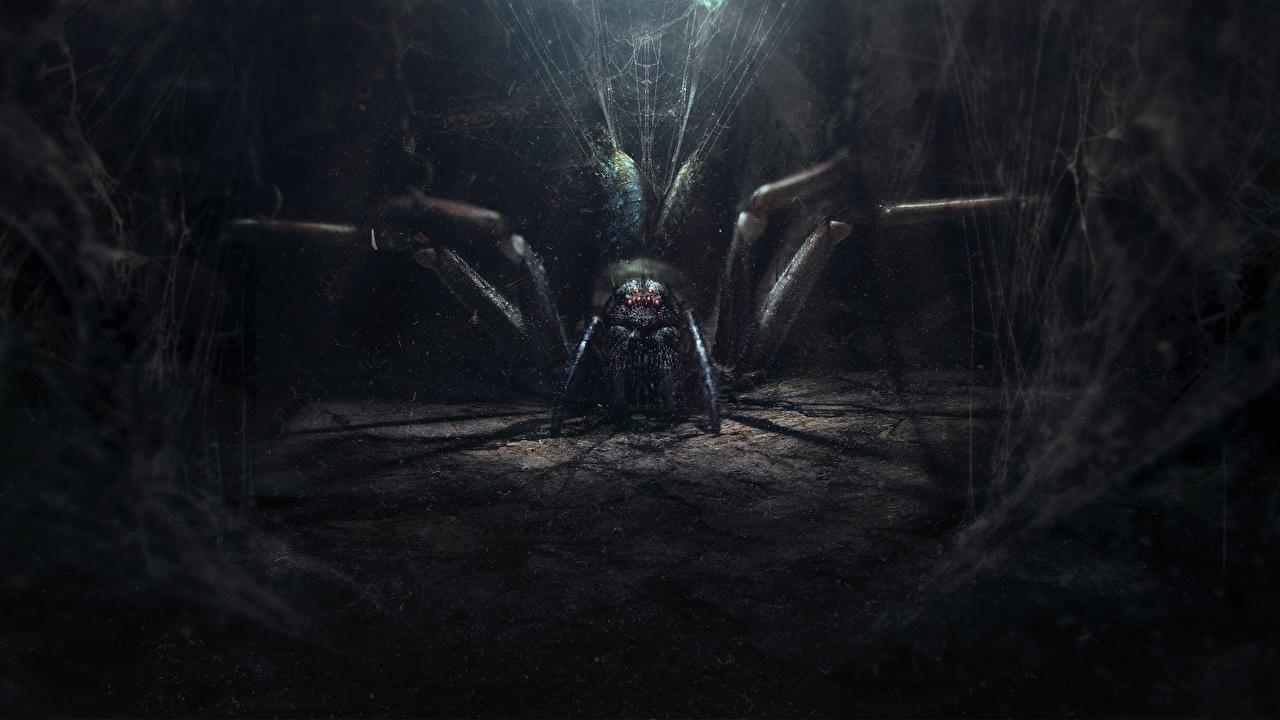 Картинки по запросу пауки фэнтези