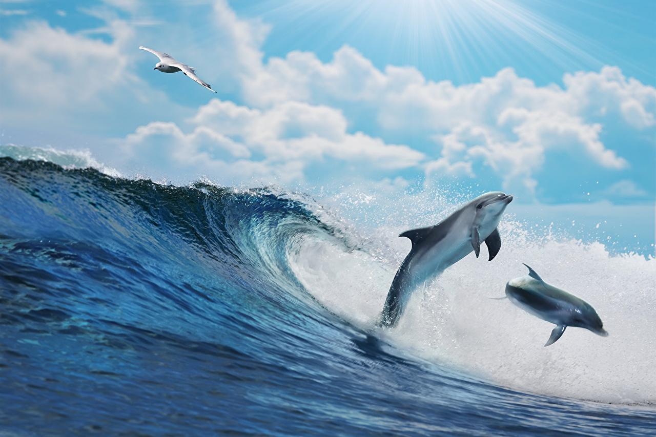 Обои дельфины. Животные foto 9