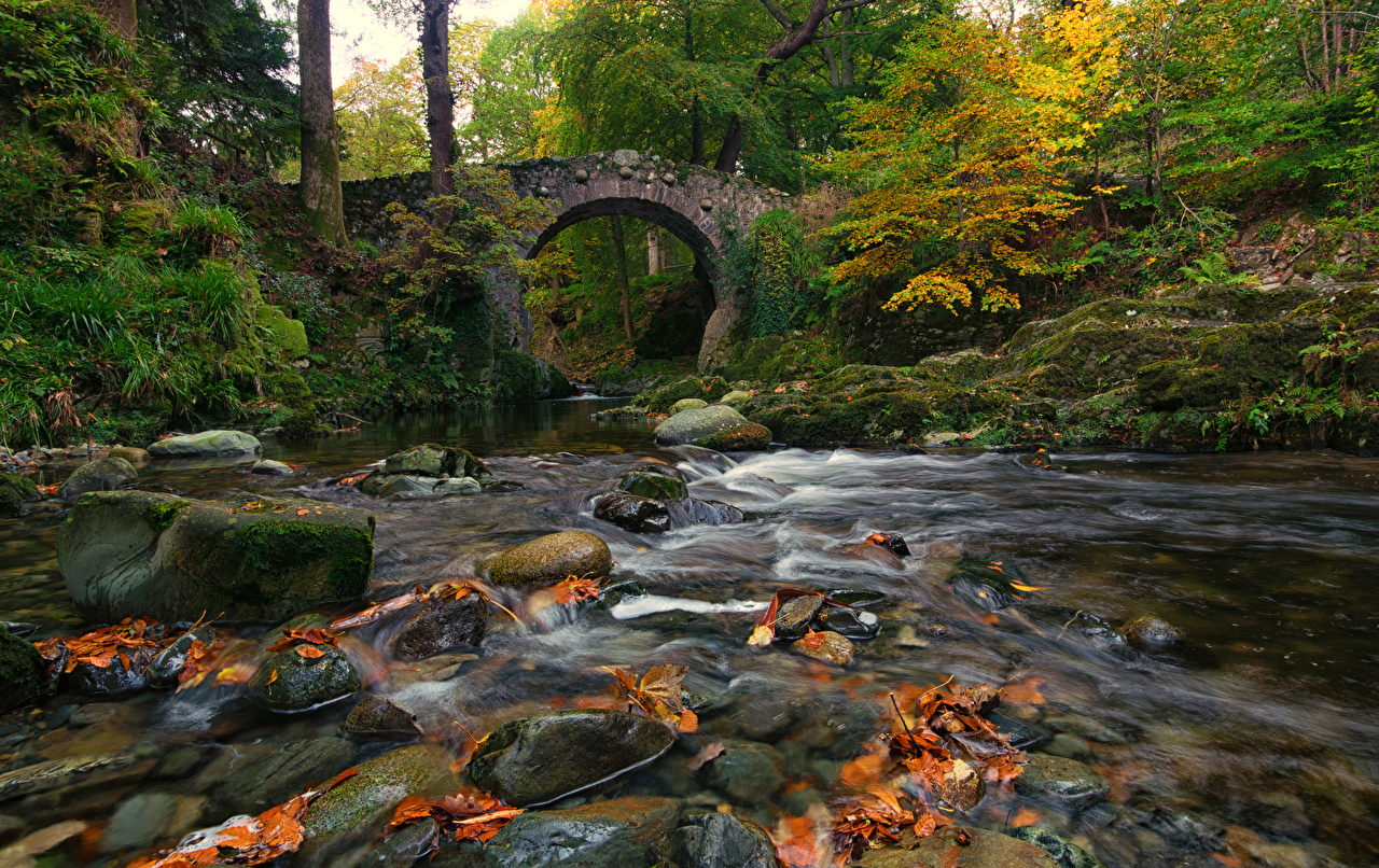 Фотографии Ирландия Мосты Осень Природа Леса Мох речка Камень осенние Реки Камни