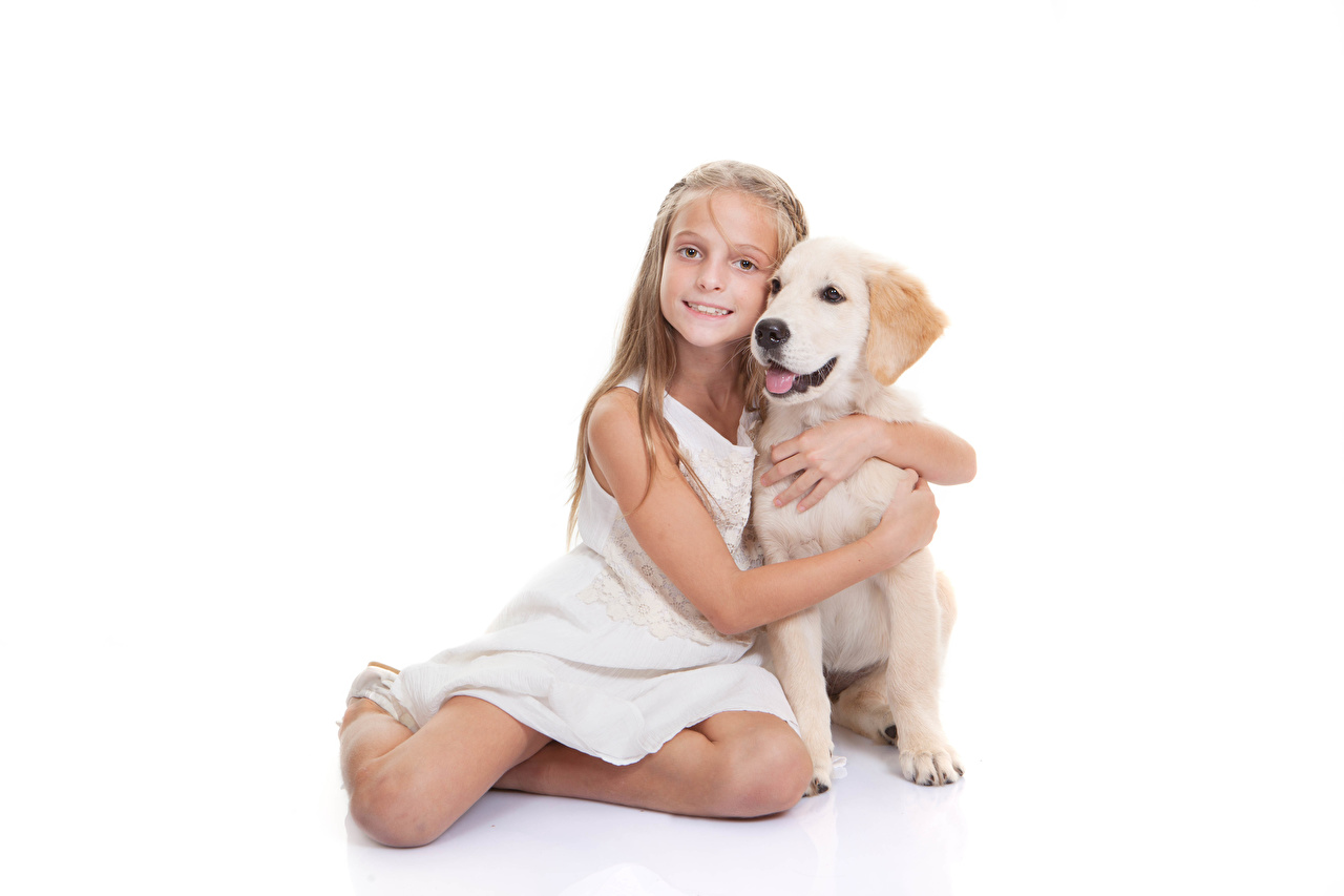 Картинка Девочки ретривера Собаки Дети обнимает Сидит смотрят Животные Белый фон девочка Ретривер собака ребёнок Объятие обнимаются сидя сидящие Взгляд смотрит животное белом фоне белым фоном