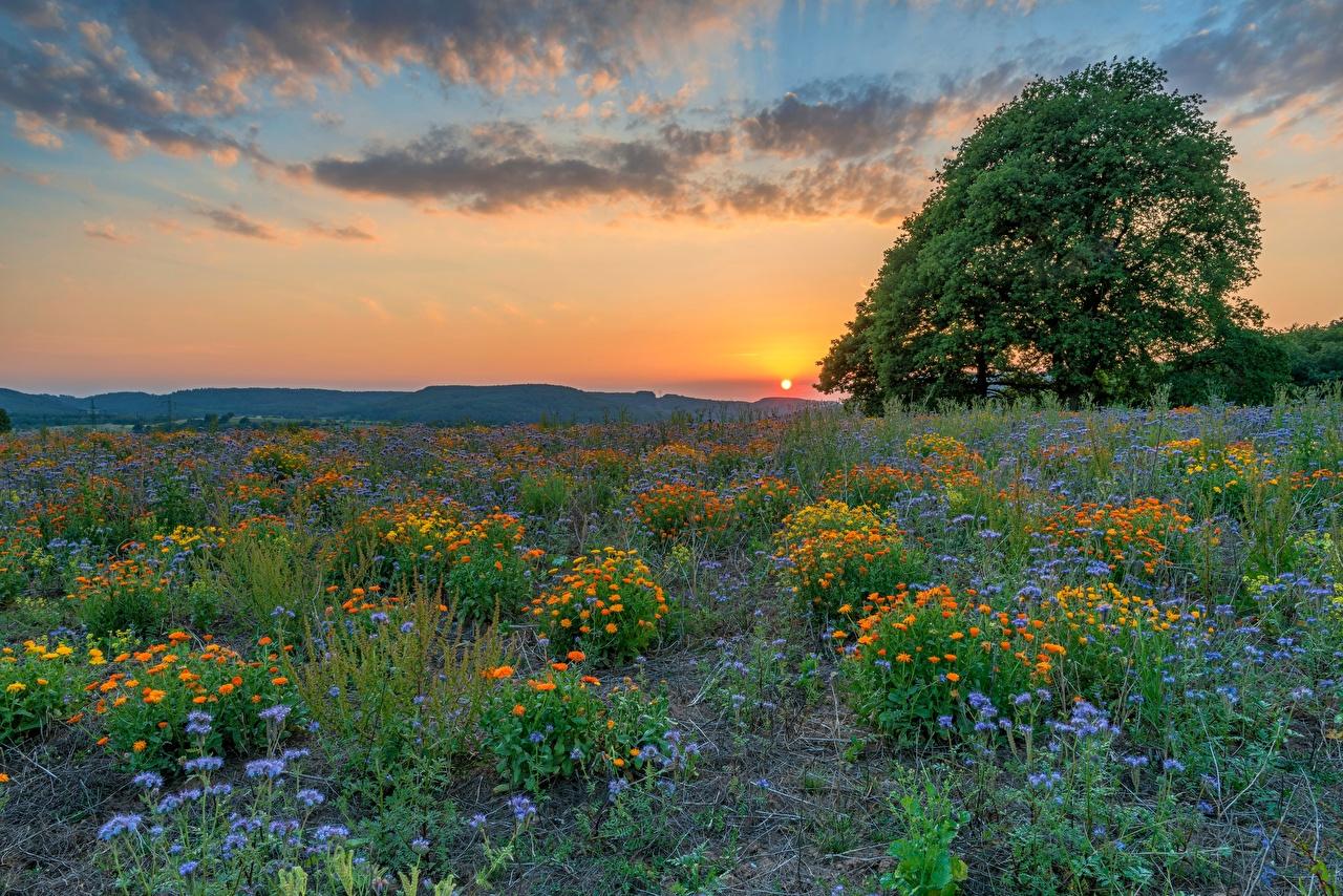 Фото Германия Klausen Солнце Природа Поля Луга Рассветы и закаты Вечер деревьев солнца рассвет и закат дерево дерева Деревья