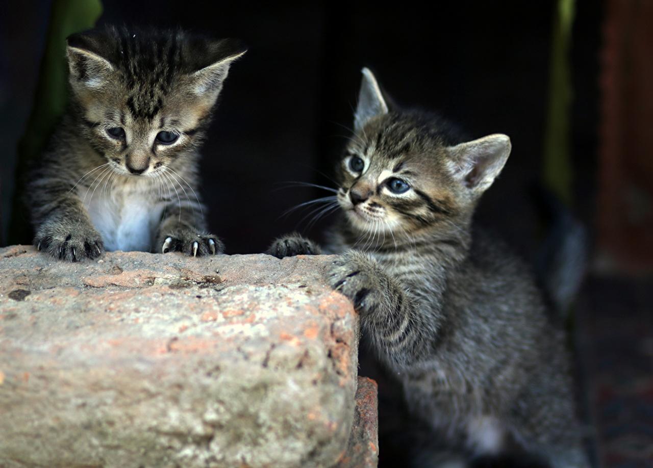 Фотография котят кошка два Животные Котята котенок котенка кот коты Кошки 2 две Двое вдвоем животное