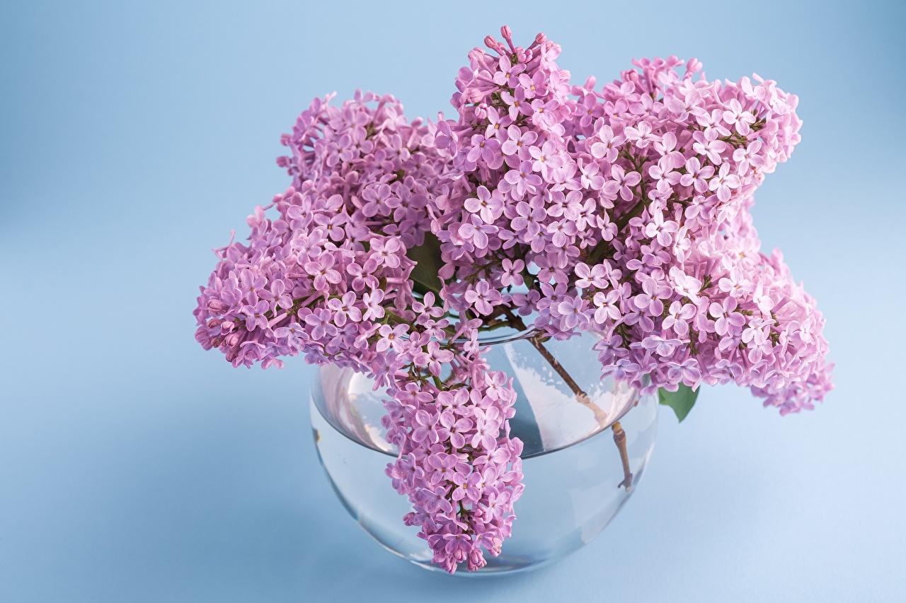 Картинки букет Сирень цветок вазы ветвь Букеты Цветы вазе Ваза Ветки ветка на ветке