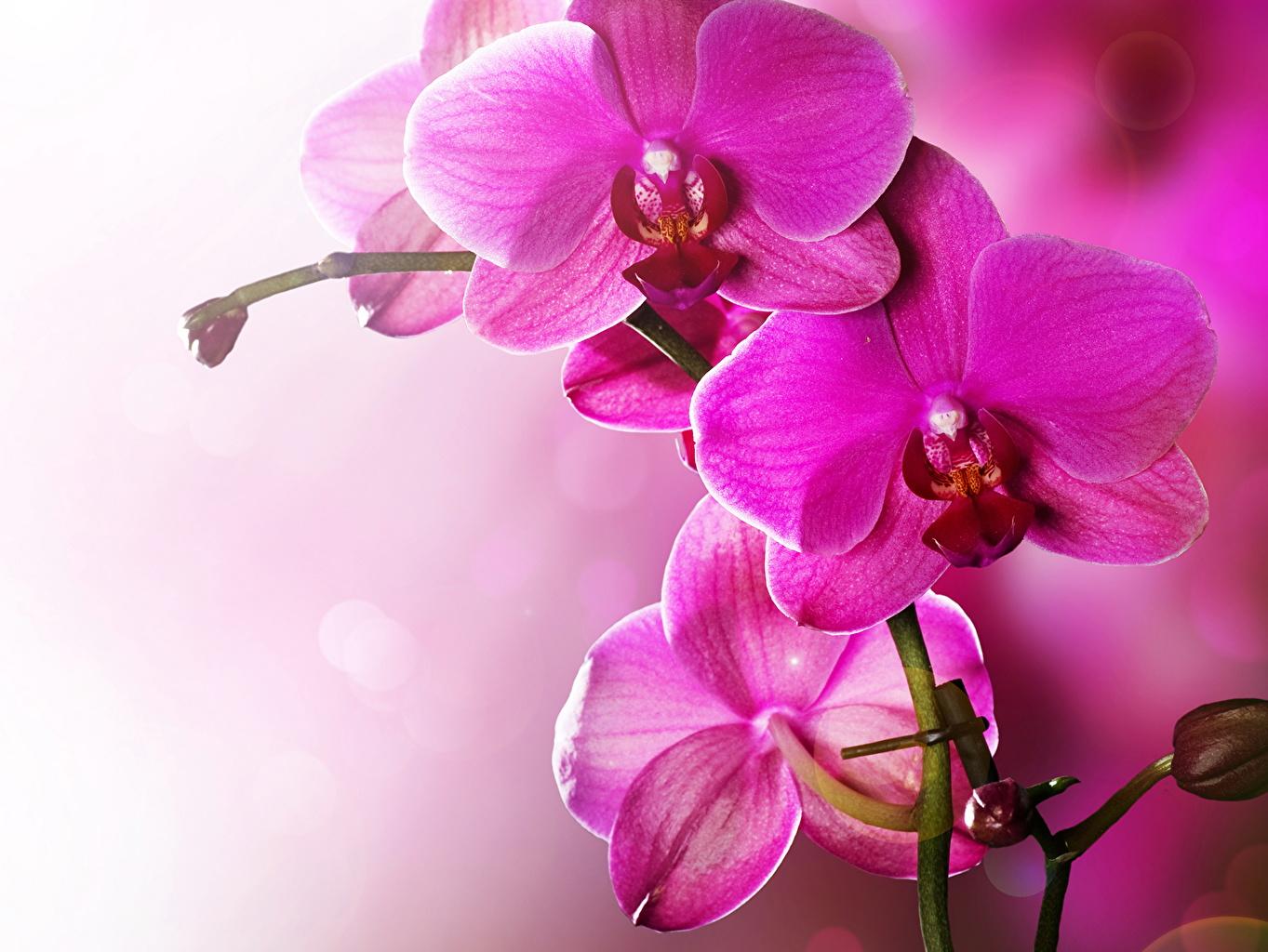 Картинки Орхидеи Цветы Крупным планом орхидея цветок вблизи