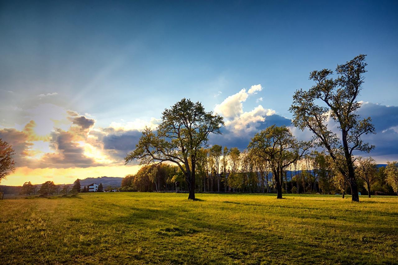 Фотография Австрия Engerwitzdorf Природа Небо Луга Облака дерева дерево облако облачно Деревья деревьев