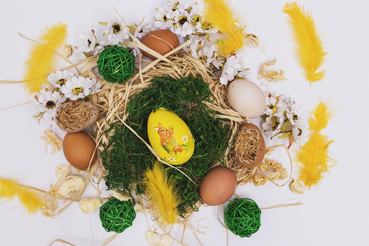 Фотография Пасха Яйца Перья Хризантемы соломе Серый фон яиц яйцо яйцами Солома сером фоне