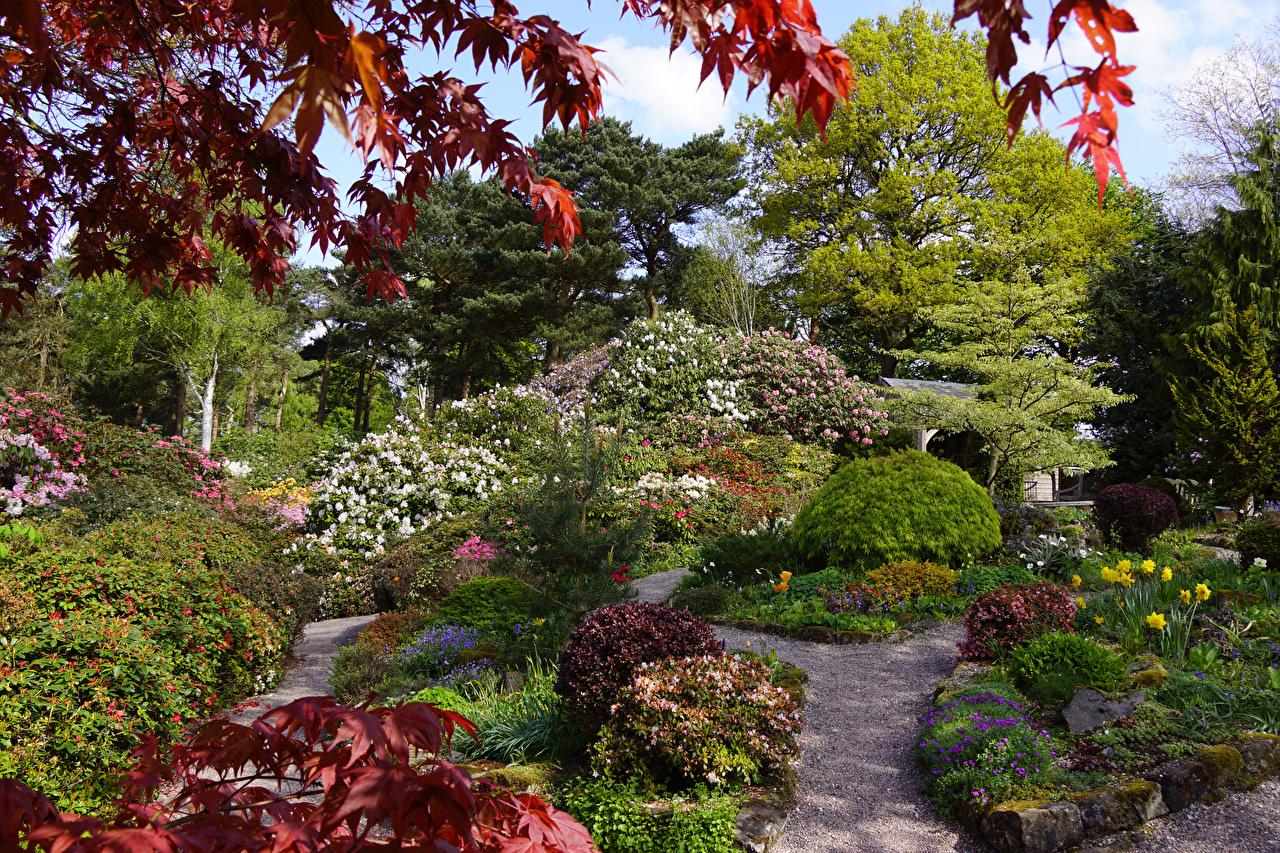 Картинка Великобритания Lee Gardens Природа Сады дерево кустов Кусты дерева Деревья деревьев