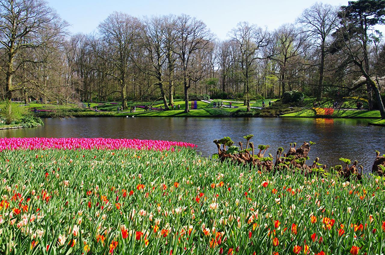 природа фото весна и картинки
