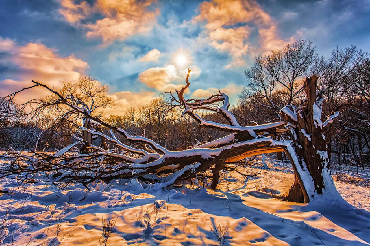 Фотографии Зима Солнце Природа Снег Небо Ветки Облака зимние ветвь