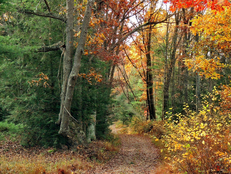 Обои для рабочего стола тропы осенние Природа лес Деревья Осень Тропа тропинка Леса дерево дерева деревьев