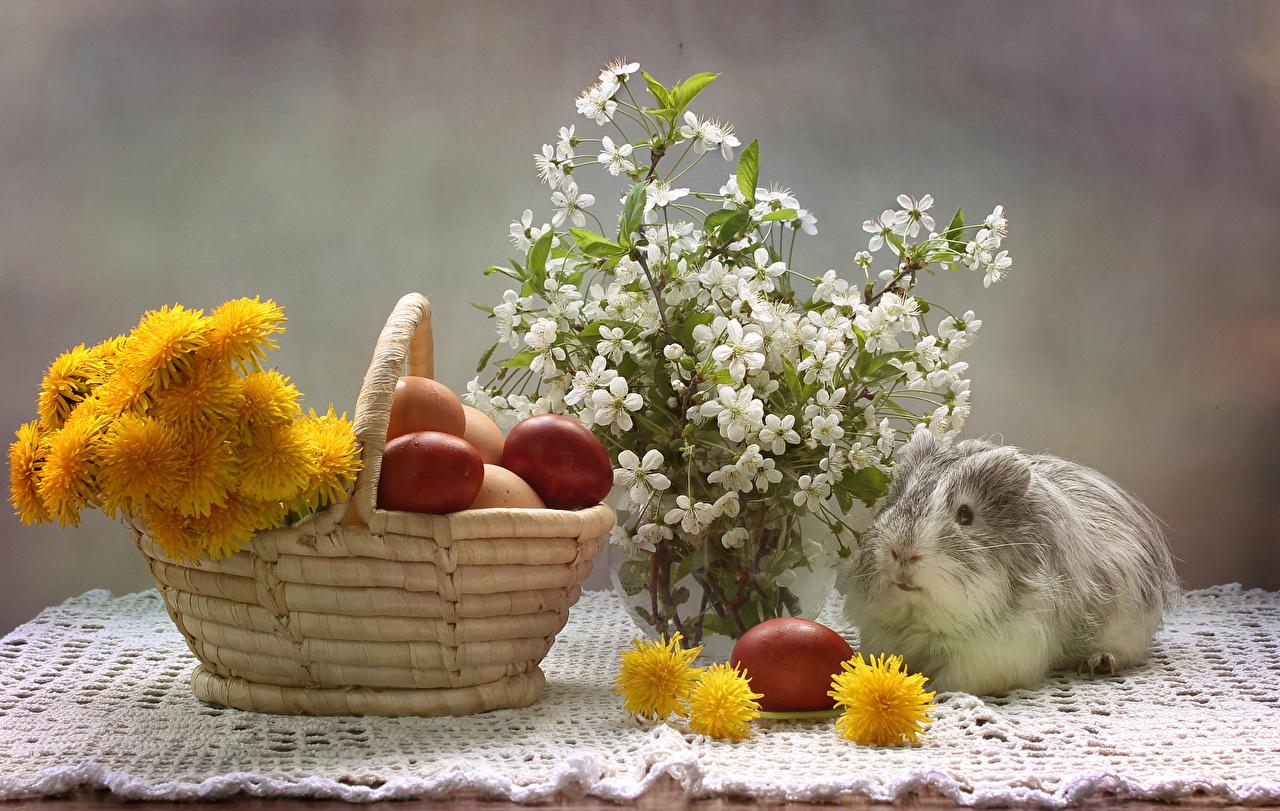 Обои для рабочего стола Пасха Морские свинки Яйца Корзина Одуванчики ветвь животное Праздники яиц яйцо яйцами корзины Корзинка Ветки ветка на ветке Животные