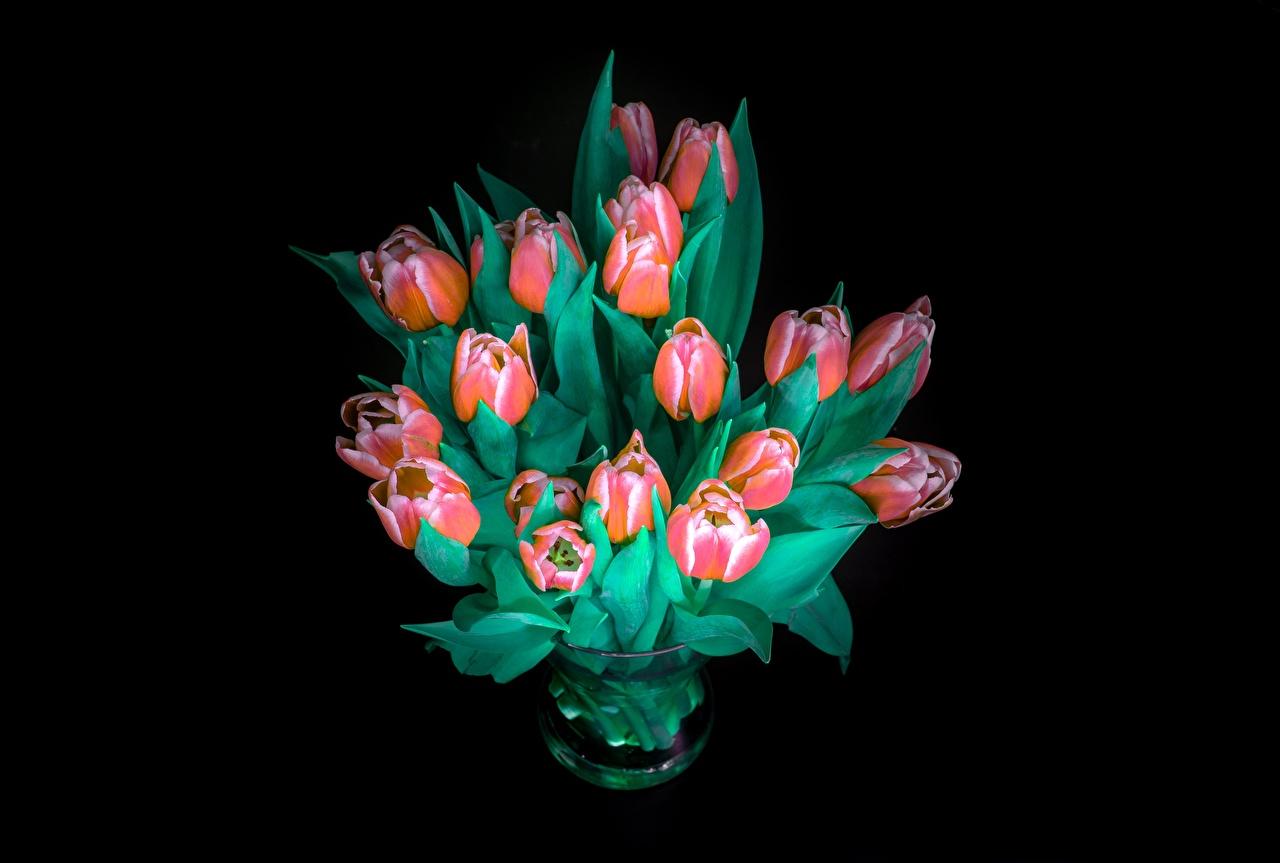 Фотография букет Тюльпаны Цветы Черный фон Букеты тюльпан цветок на черном фоне